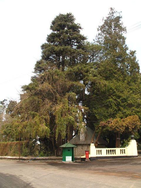 Image of Tree p014