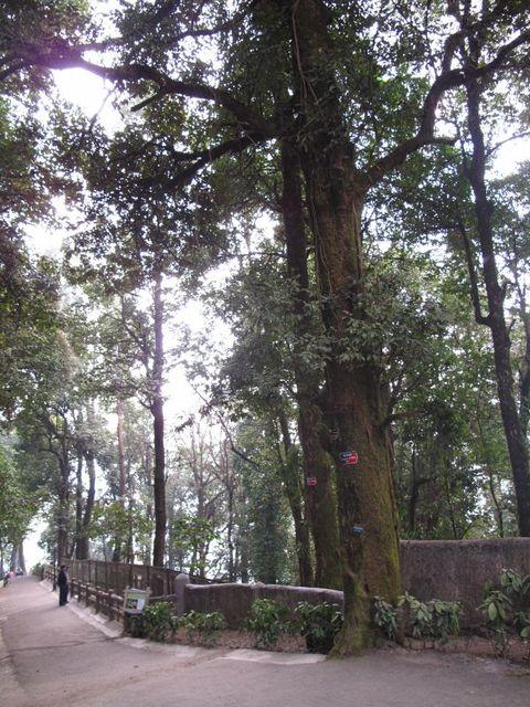 Image of Tree p018