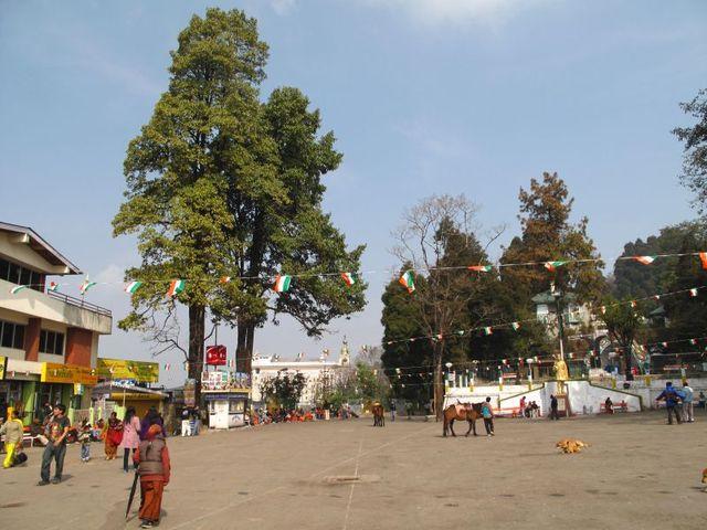 Image of Tree p020