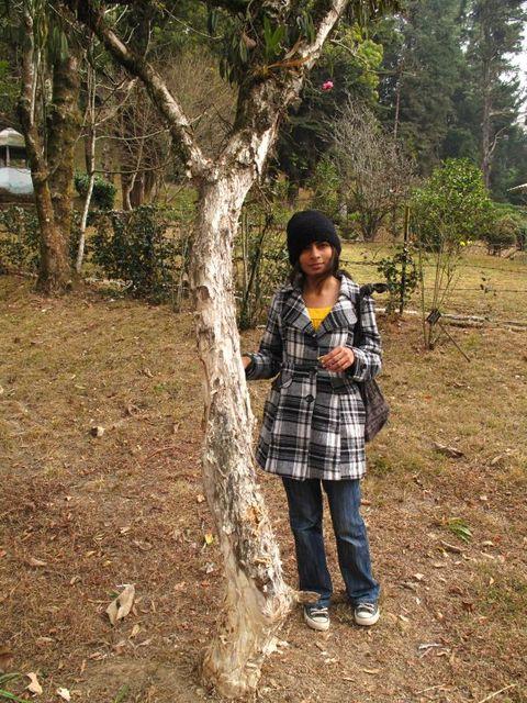 Image of Tree p023