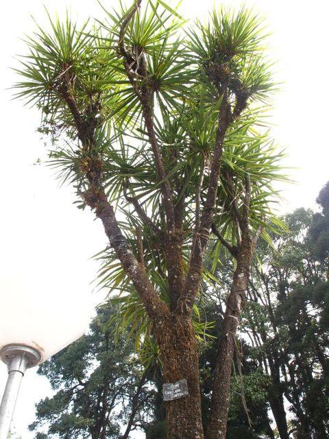 Image of Tree p026