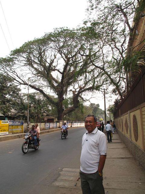 Image of Tree q001