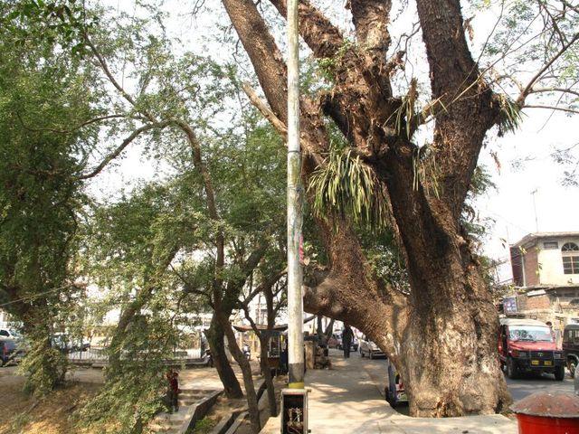 Image of Tree q003