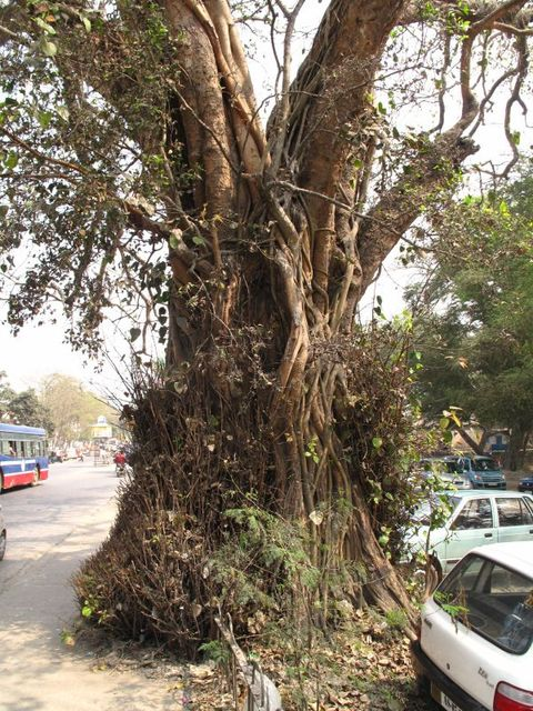 Image of Tree q004