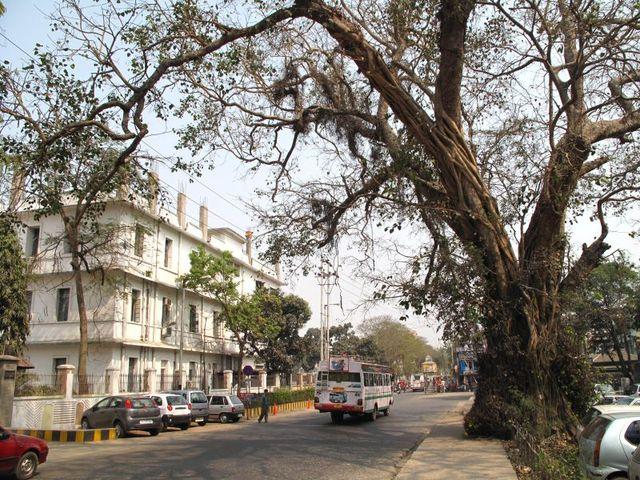 Image of Tree q005