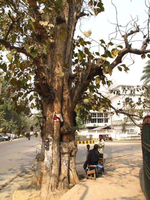Image of Tree q006