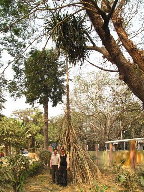 Image of Tree q007