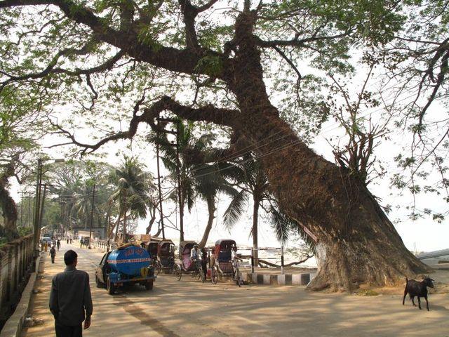 Image of Tree q008