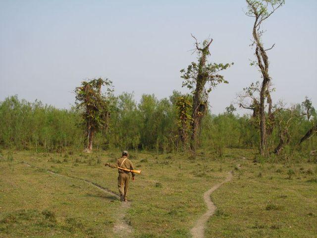 Image of Tree q014