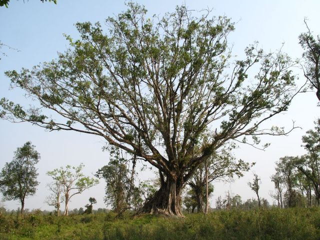 Image of Tree q015