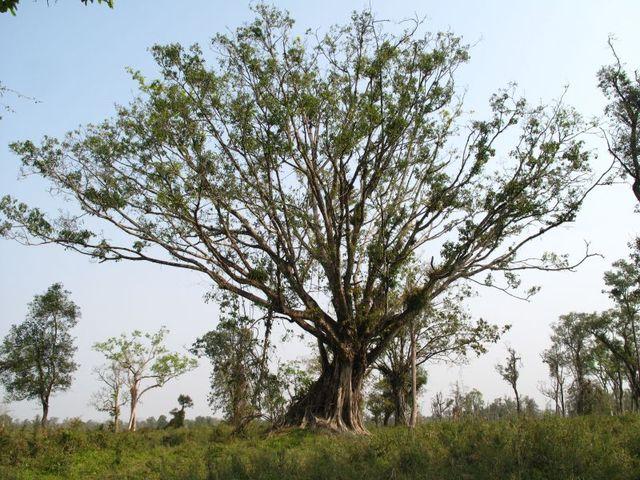 Image of Tree q015