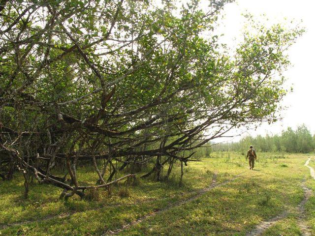 Image of Tree q016
