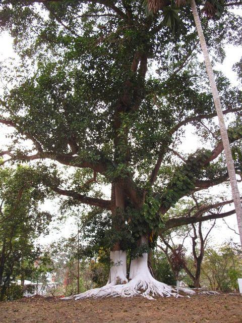 Image of Tree q019