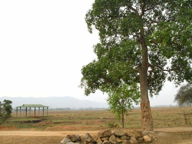 Image of Tree q021