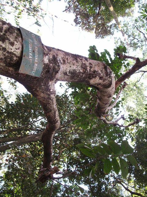 Image of Tree q025