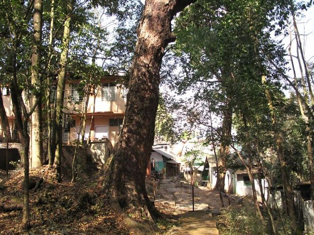 Image of Tree q027