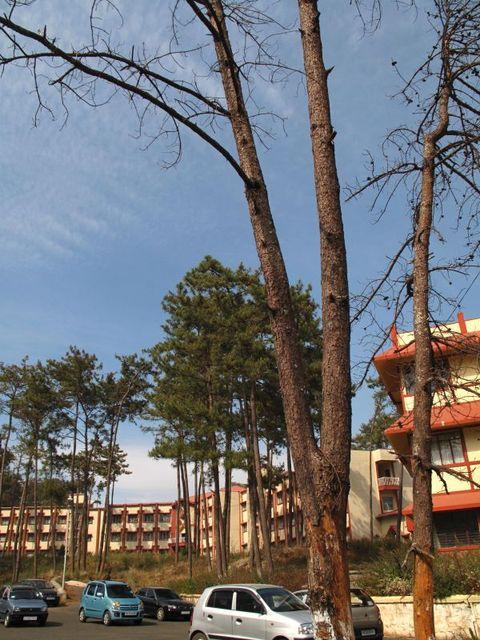 Image of Tree q032