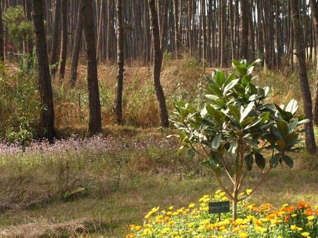 Image of Tree q033