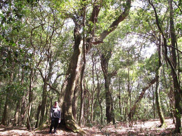 Image of Tree q036