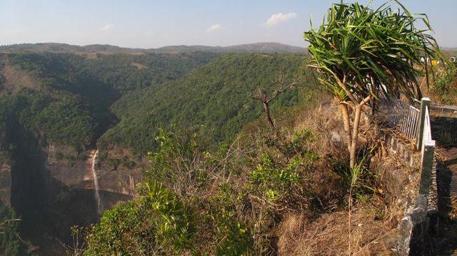 Image of Tree q043