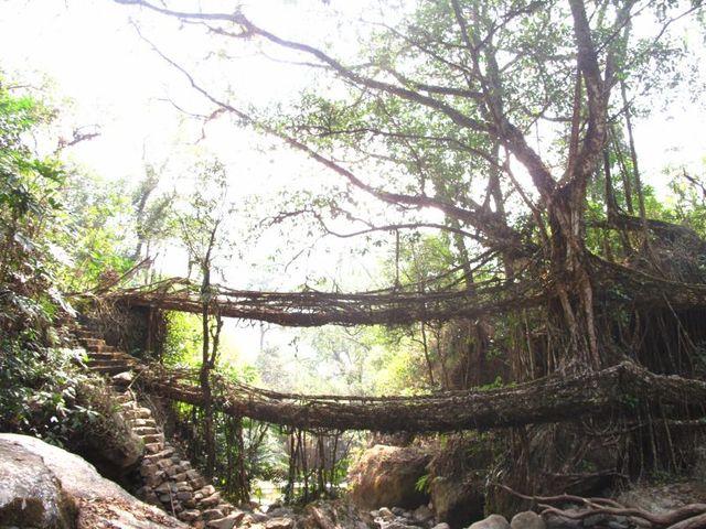 Image of Tree q050