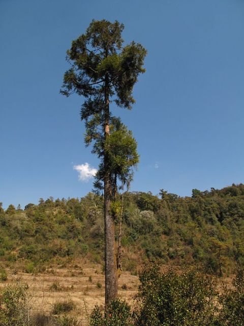 Image of Tree q052