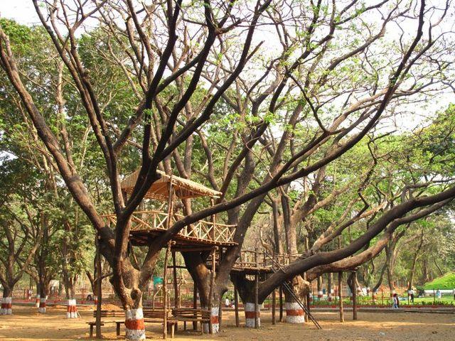 Image of Tree r002