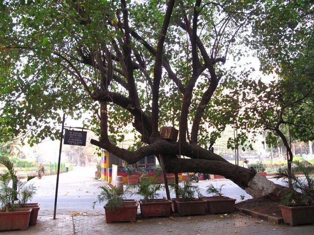 Image of Tree r004