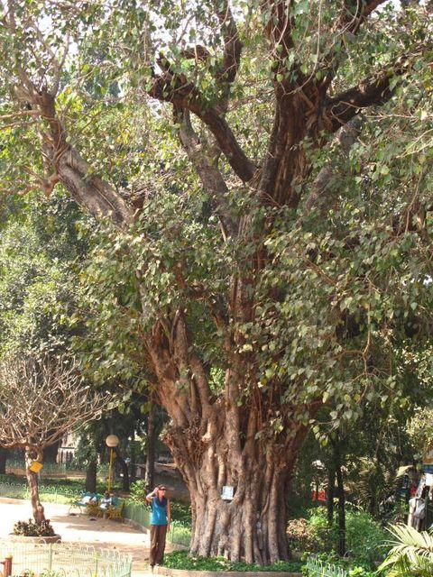 Image of Tree r006