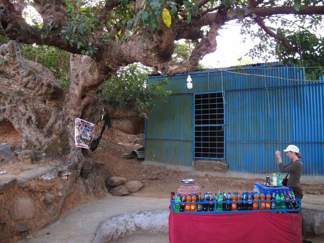 Image of Tree r010