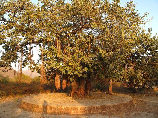 Image of Tree r014