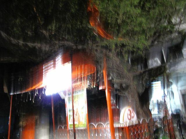 Image of Tree r017