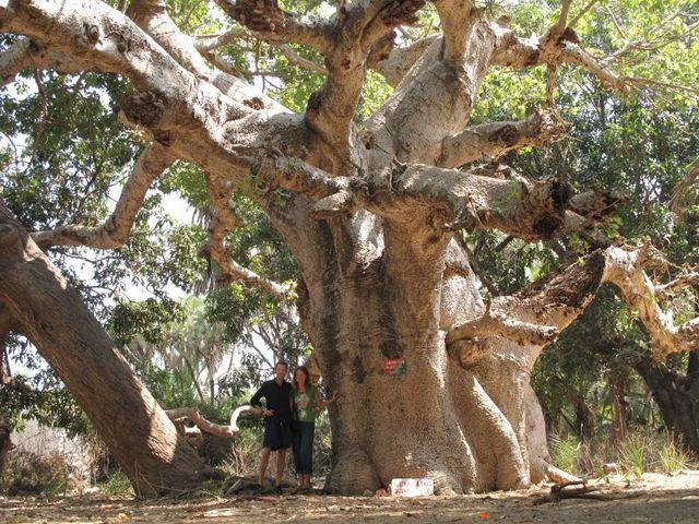Image of Tree r018