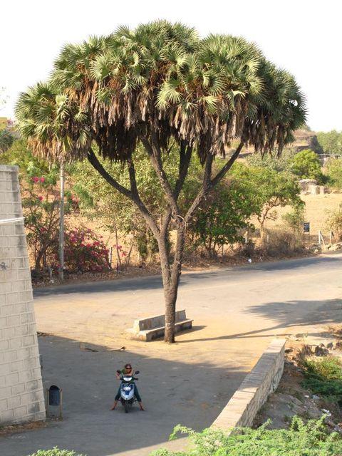 Image of Tree r023