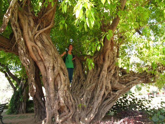 Image of Tree r025