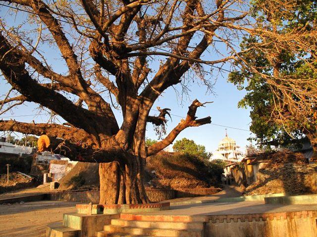 Image of Tree r028