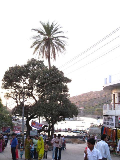Image of Tree r029