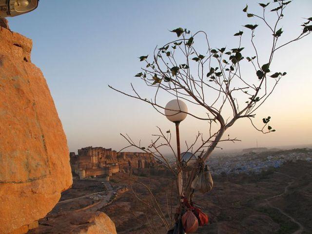 Image of Tree r030