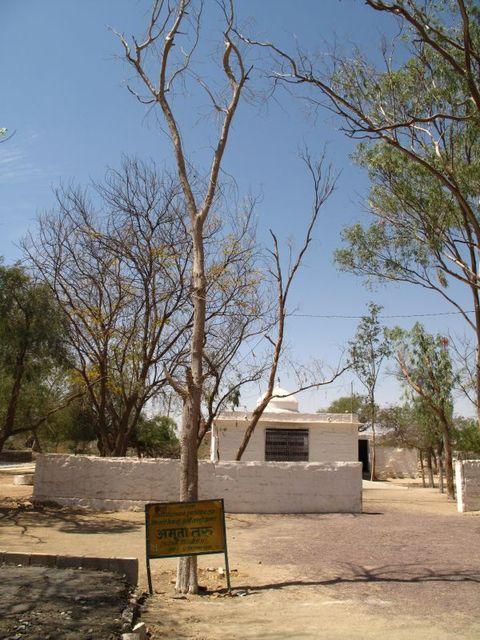 Image of Tree r031