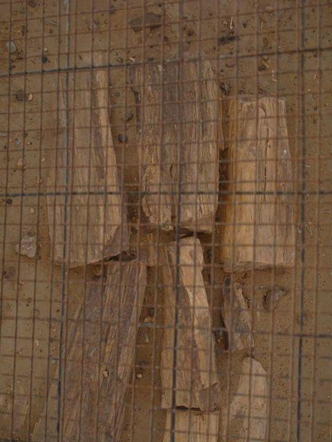 Image of Tree r038