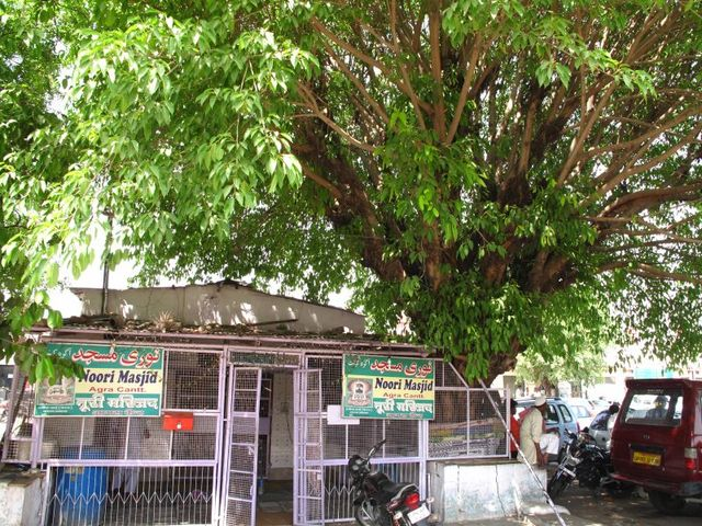 Image of Tree s001