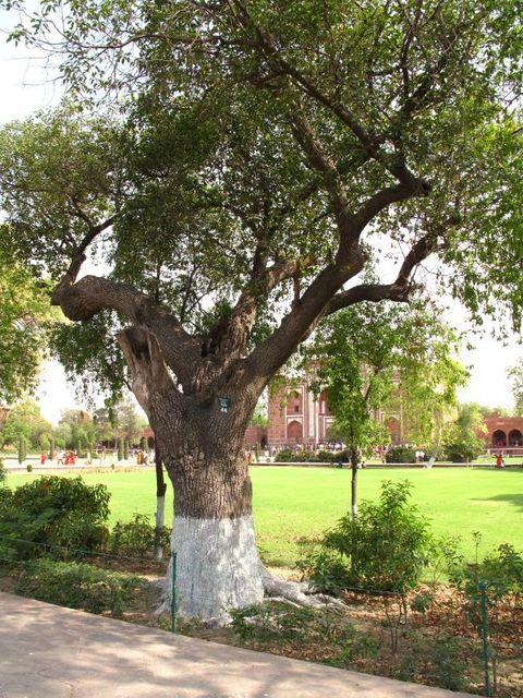 Image of Tree s006