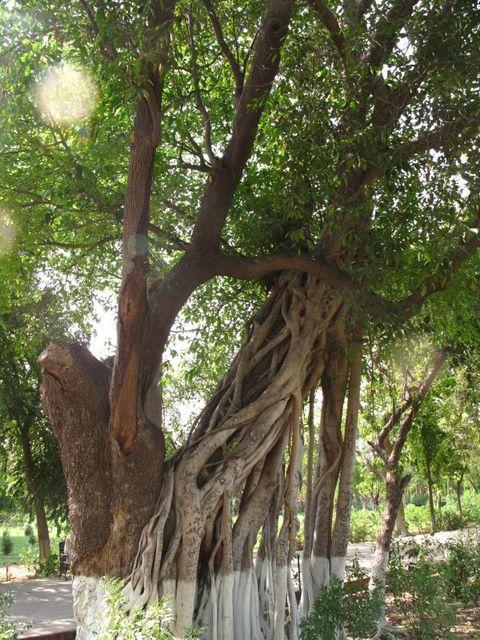 Image of Tree s007