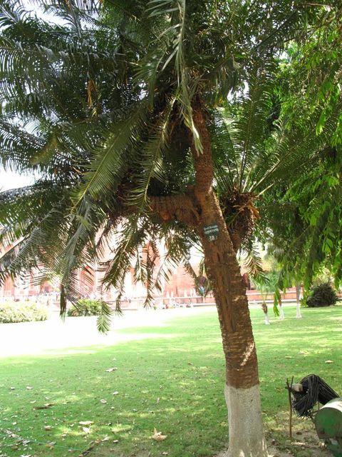 Image of Tree s008