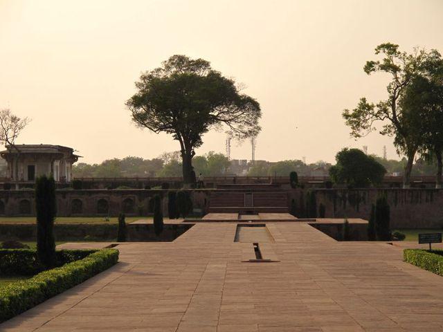 Image of Tree s011