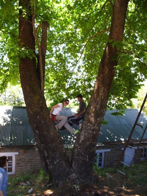 Image of Tree t003