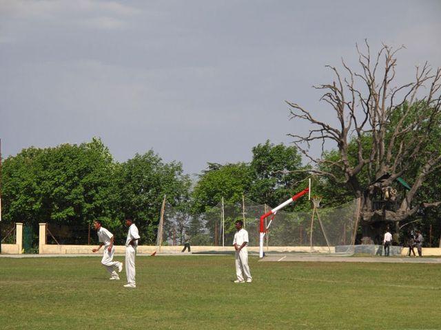 Image of Tree t005