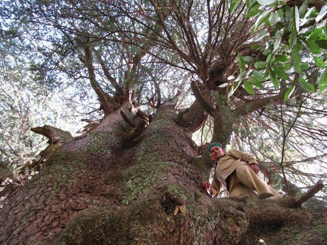 Image of Tree t006