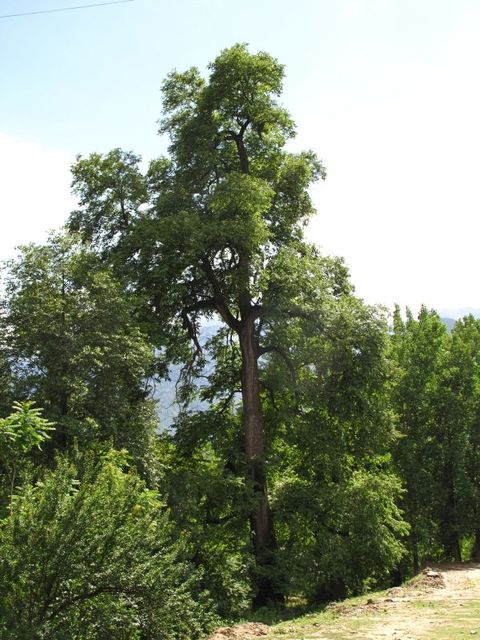Image of Tree t007
