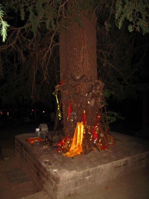 Image of Tree t010